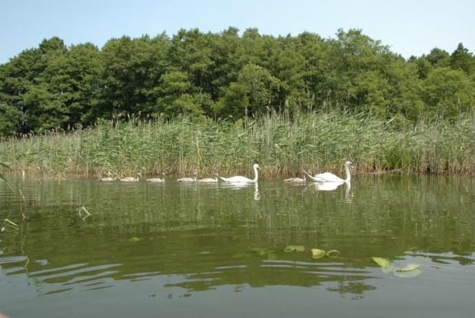 jezioro_pozezdrze
